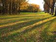 札幌の紅葉13~落葉と樹影