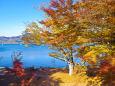 山中湖 湖畔の紅葉