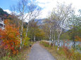 上高地 紅葉と白樺の散策路