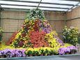 菊の花の山