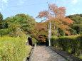 御霊神社・参道の石段