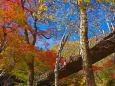花貫渓谷 汐見滝吊り橋と紅葉