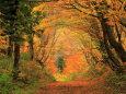 落葉と紅葉の山道
