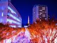 夜景 花火 イルミ 光の欅坂 六本木ヒルズ 壁紙1920x1280 壁紙館