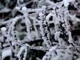 追憶2017年1月・金剛山霧氷