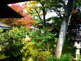 大徳寺 黄梅院の秋(6)