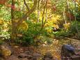 有栖川宮記念公園の秋