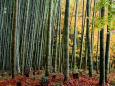 竹林の風情