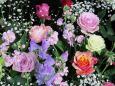 華やかに早春の花とバラ