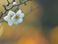 散歩道の花 1801-12-1