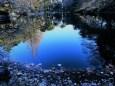 新宿御苑下の池