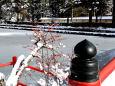雪の高野山・結氷蓮池