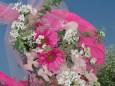 早春の花柔らかく開く