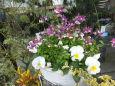 春を待っている花たち