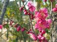 散歩道の花 1802-14-1