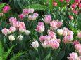 早春の草花展フォックストロット