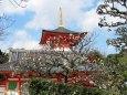 宝塚中山観音寺の多宝塔と梅