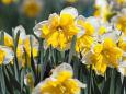 散歩道の花 1803-16-2