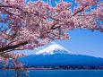 日本の風景 富士山と桜 壁紙19x1280 壁紙館