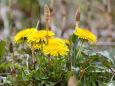 散歩道の花 1803-19-2