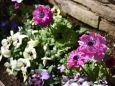 春の花壇4