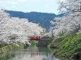 桜の季節近づく2