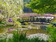藤と新緑のフラワーパーク