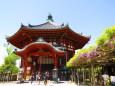 奈良興福寺南円堂と藤の花