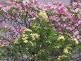 散歩道の花 1804-23-2