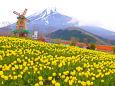 富士山と風車とチューリップ