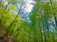 日本の風景 軽井沢野鳥の森 壁紙1920x1280 壁紙館