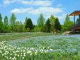 春の国営備北丘陵公園8