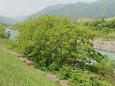 松本梓川の春