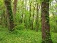 新緑の原生林 2