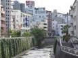 神田川源水橋付近