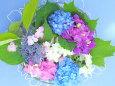 紫陽花の水盤