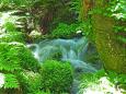 木漏れ日の渓流-初夏7