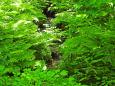 草の間を流れる源流2