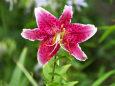 散歩道の花 1807-13-1