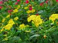 散歩道の花 1807-13-2