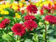 散歩道の花 1807-19-1