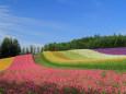 朝の彩りの丘~ファーム富田