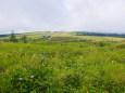 夏の美ヶ原高原