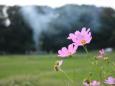 散歩道の花 1809-20-1