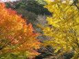 日本の風景 銀杏と紅葉 壁紙19x1080 壁紙館