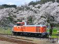 DD16-桜を背に