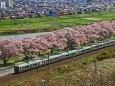 一目千本桜を行く東北本線