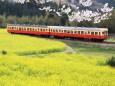小湊鐵道 石神なの花畑